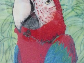 Papagei Bild
